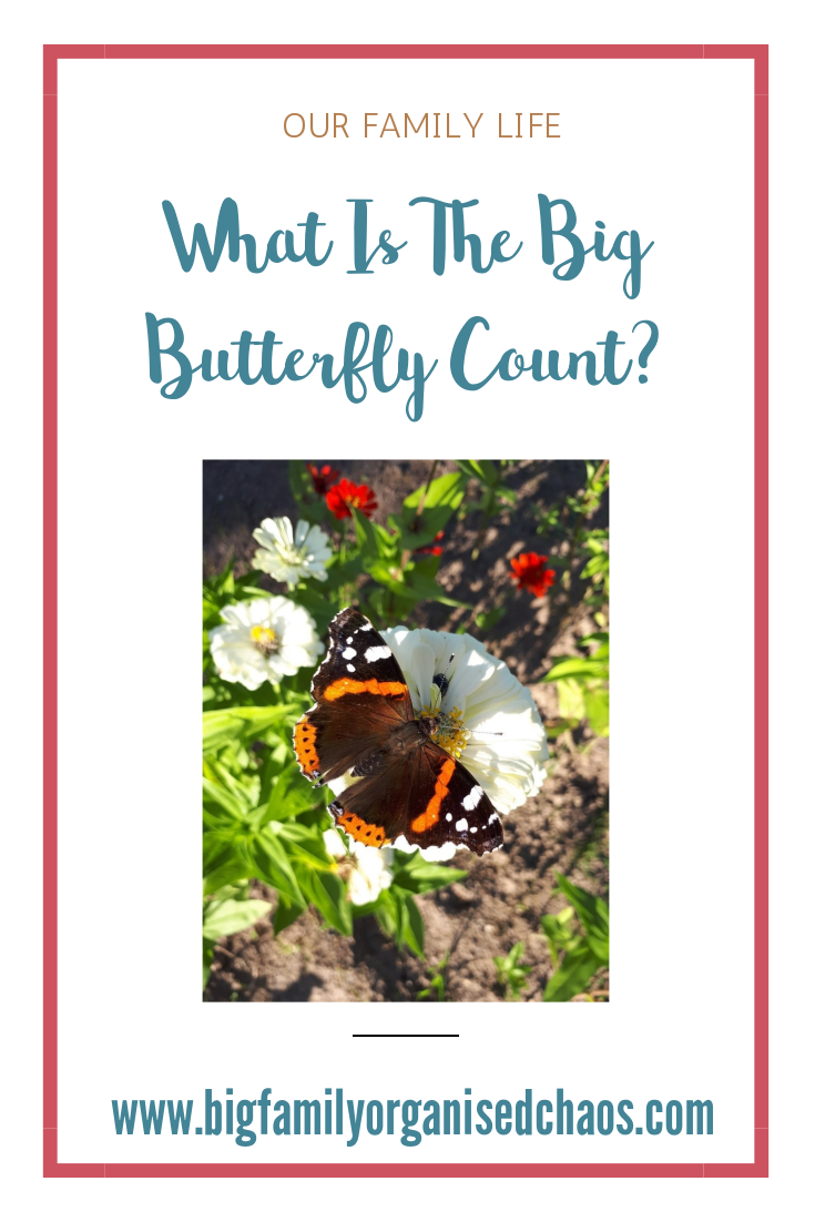 every year in July and August The Big Butterfly Count takes place, click through to find out more