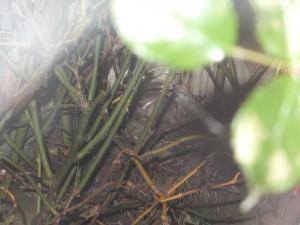 new baby birds!