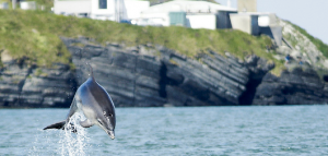 dolphin Newquay Wales