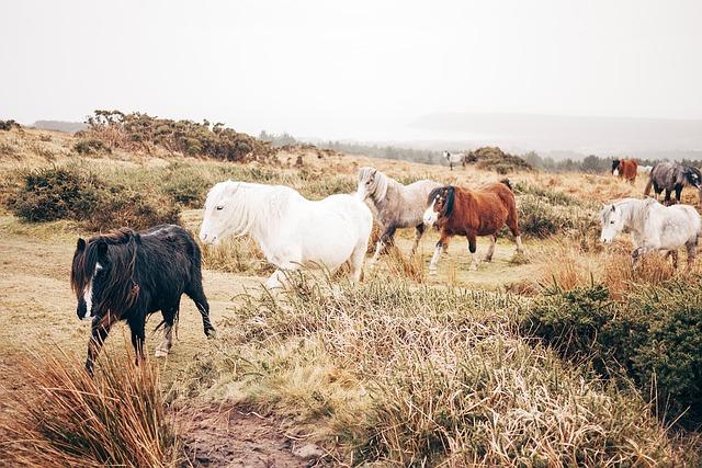 horses-1149922_640