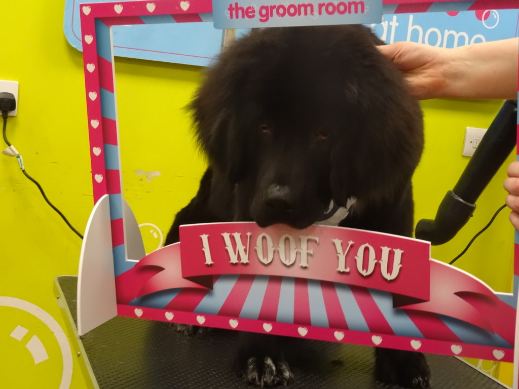 Merrie Takes A Trip To The Groom Room at Pets At Home