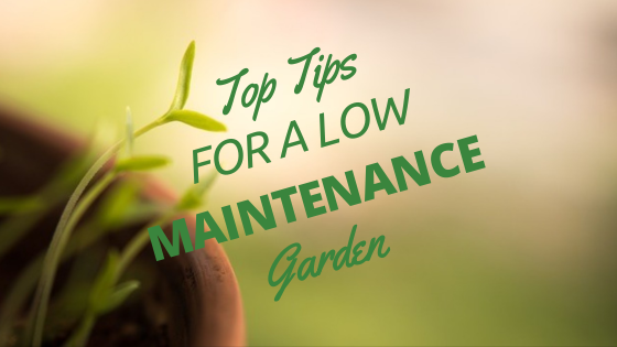 Top Tips for a Low Maintenance Garden