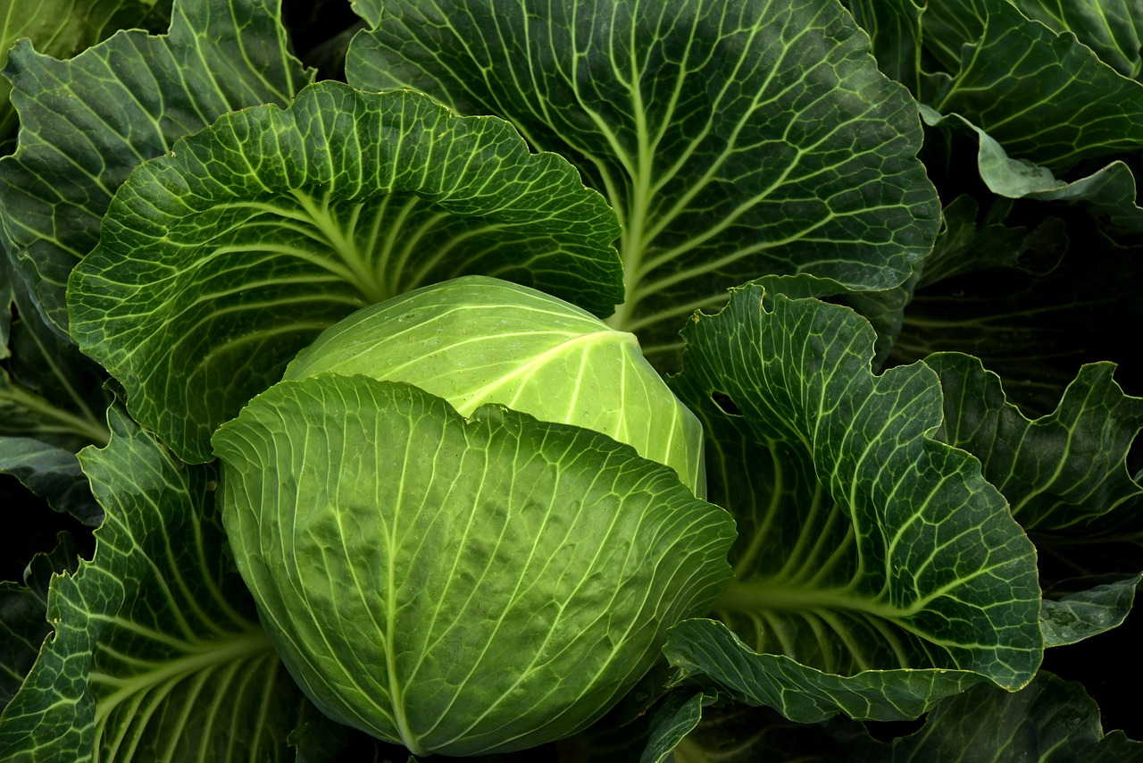 vegetables in containers - cabbages