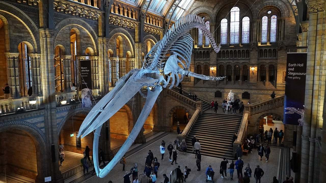 London Attractions That Are Free - Natural History Museum