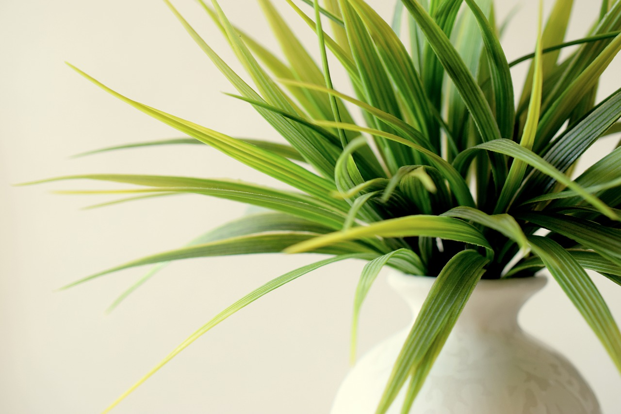 furnish your first home with indoor plants